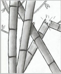 bamboo_1_000000084566_1